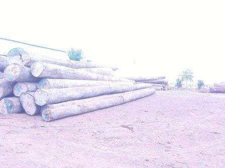 Wood Log.jpg