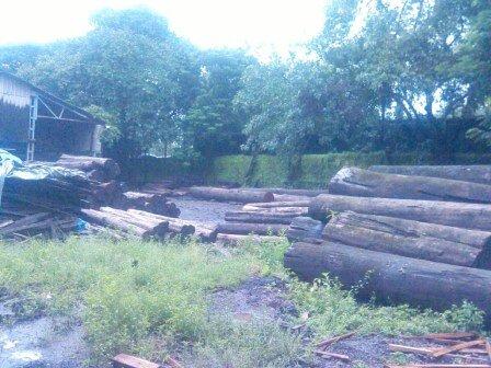 wood logs 1.jpg